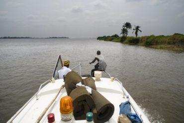 Congo lion between Kinshasa and Lukolela