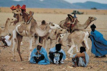 Mauritania's camel routes