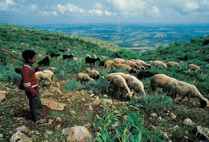 The livestock sector in Morocco