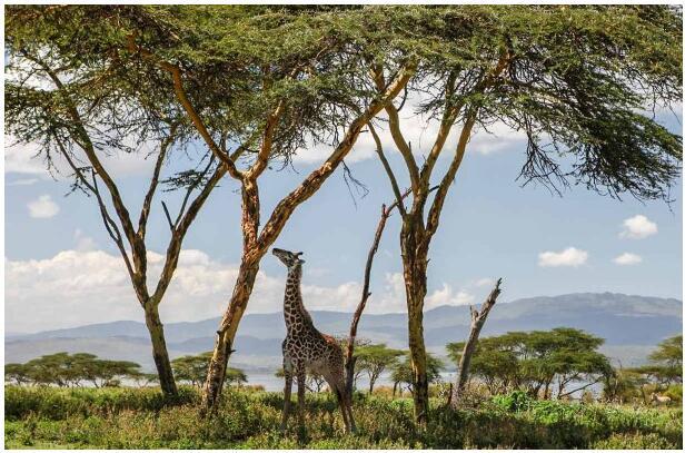 NAIROBI AS A DESTINATION