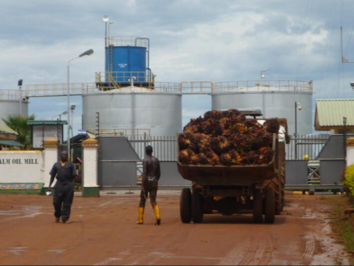 Palm oil production on the Ssese Islands